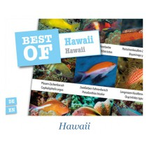 DIVE-STICKER HAWAII