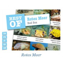 DIVE-STICKER ROTES MEER